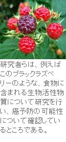 SP-raspberry